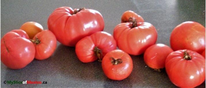 counter tomato logo 2016