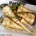 parsnip cover logo
