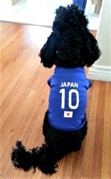 cute dog Japanese fan world cup Russia