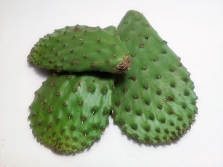 Paddle Cactus –Nopales