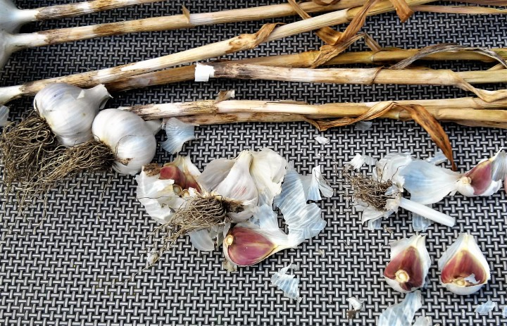 Garlic – Fall is the Time to Sow!