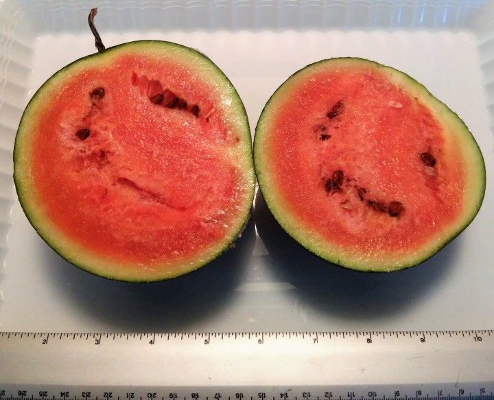 measuring sliced watermelon