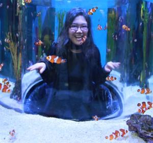 Swimming with the clown fish Ripley's Aquarium