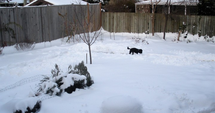 A Midwinter Day's Dream – Of Beasts, Baby Jesus, Candles andCorn
