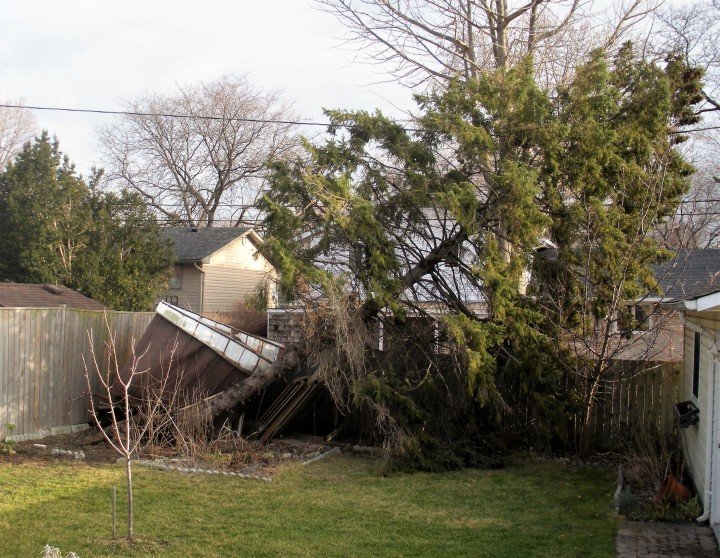 If a Tree is Falling – Planning The UrbanLandscape