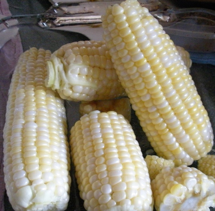 ears of corn August 2016