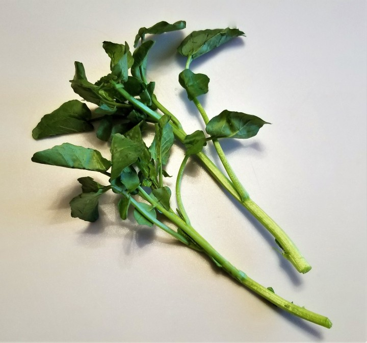 Watercress – An Old World Quelite