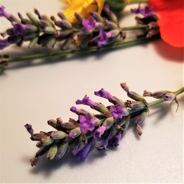 001 Lavender