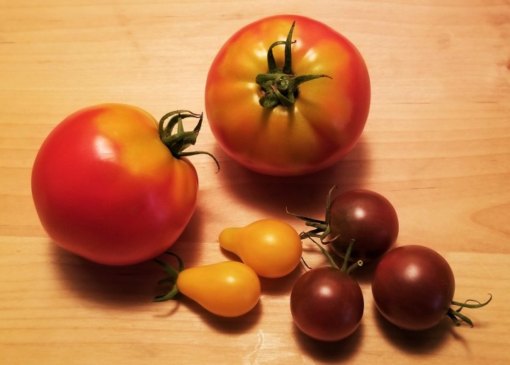 Tomatoes with aGrudge?