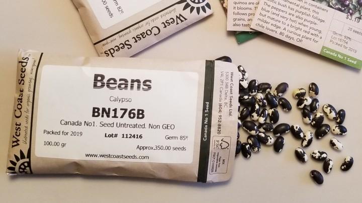 Calypso beans Orca 2019