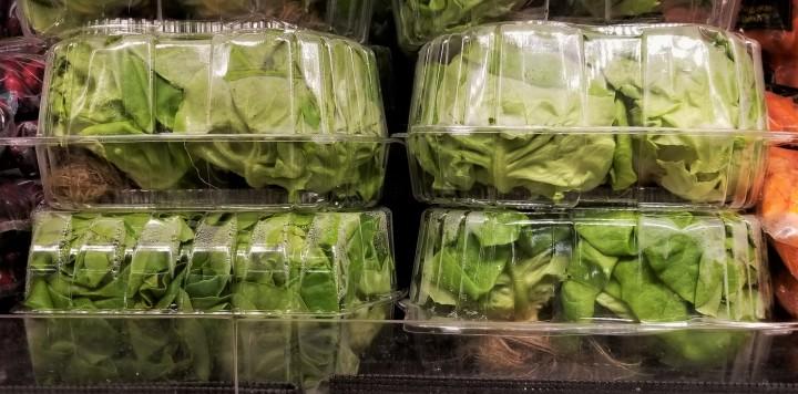 001 hydroponic lettuce