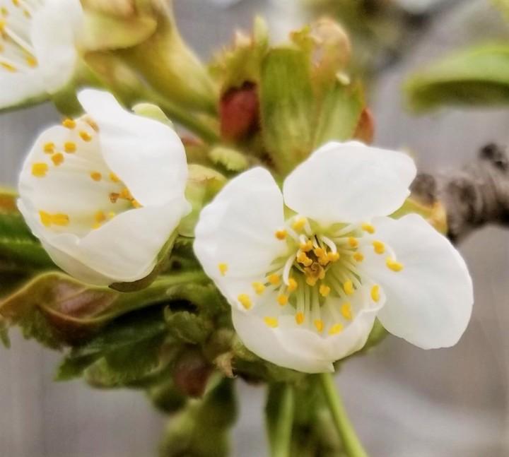 FOTD – CherryBlossoms