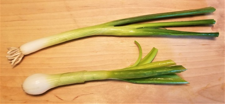 009 scallion and knob onion