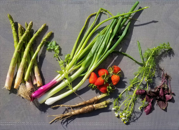 Harvest of the Day June 12 2019