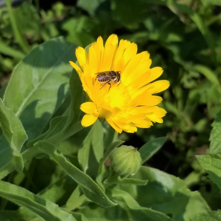Bee, Wasp or …Fly?