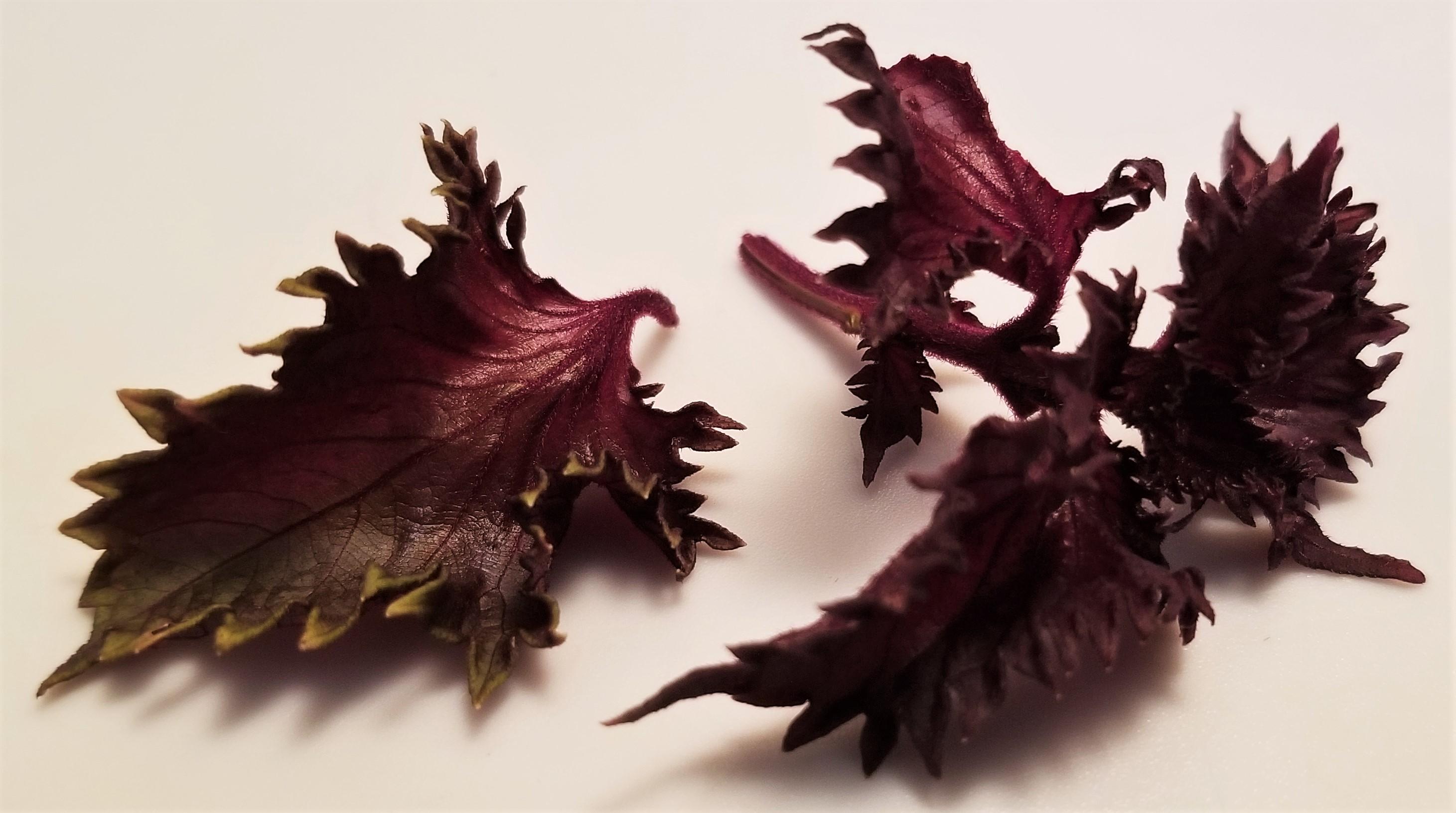 001 Red Perilla leaves